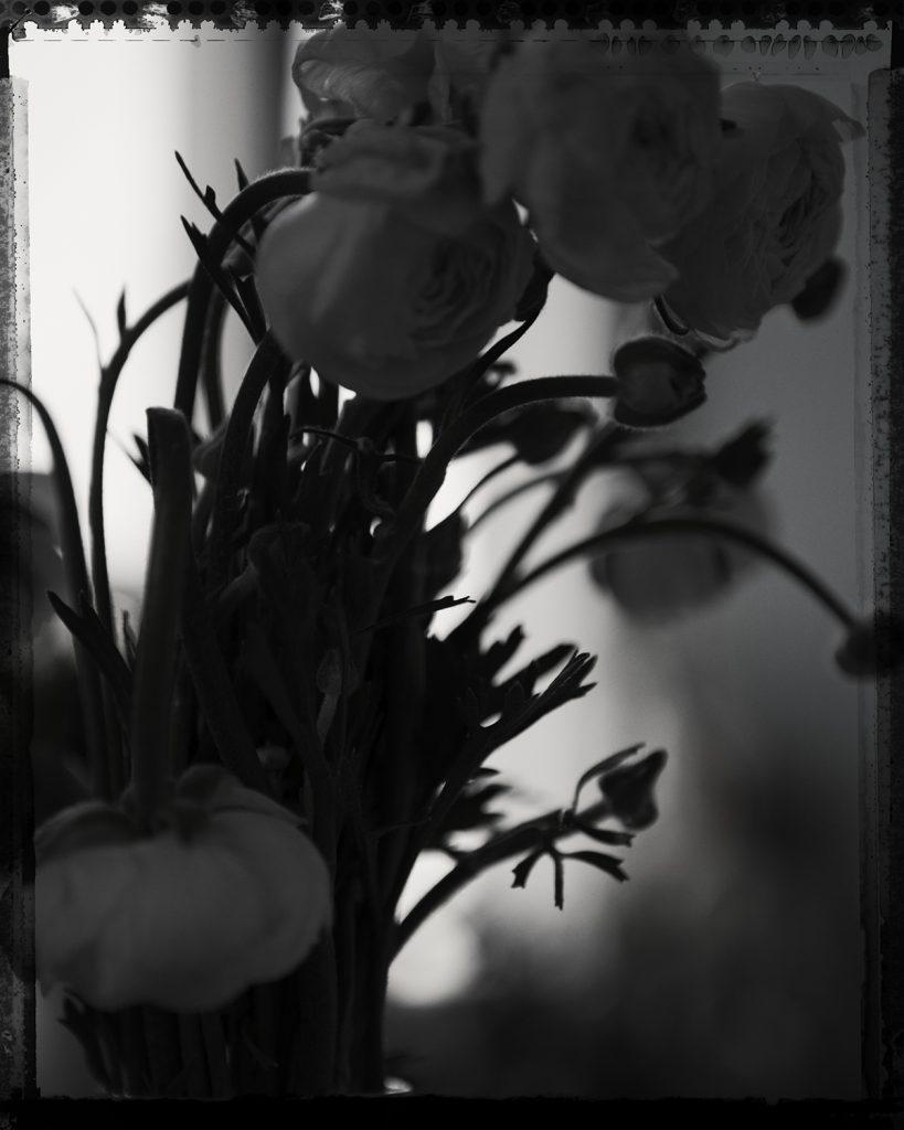 Flores Ephemeri 17127