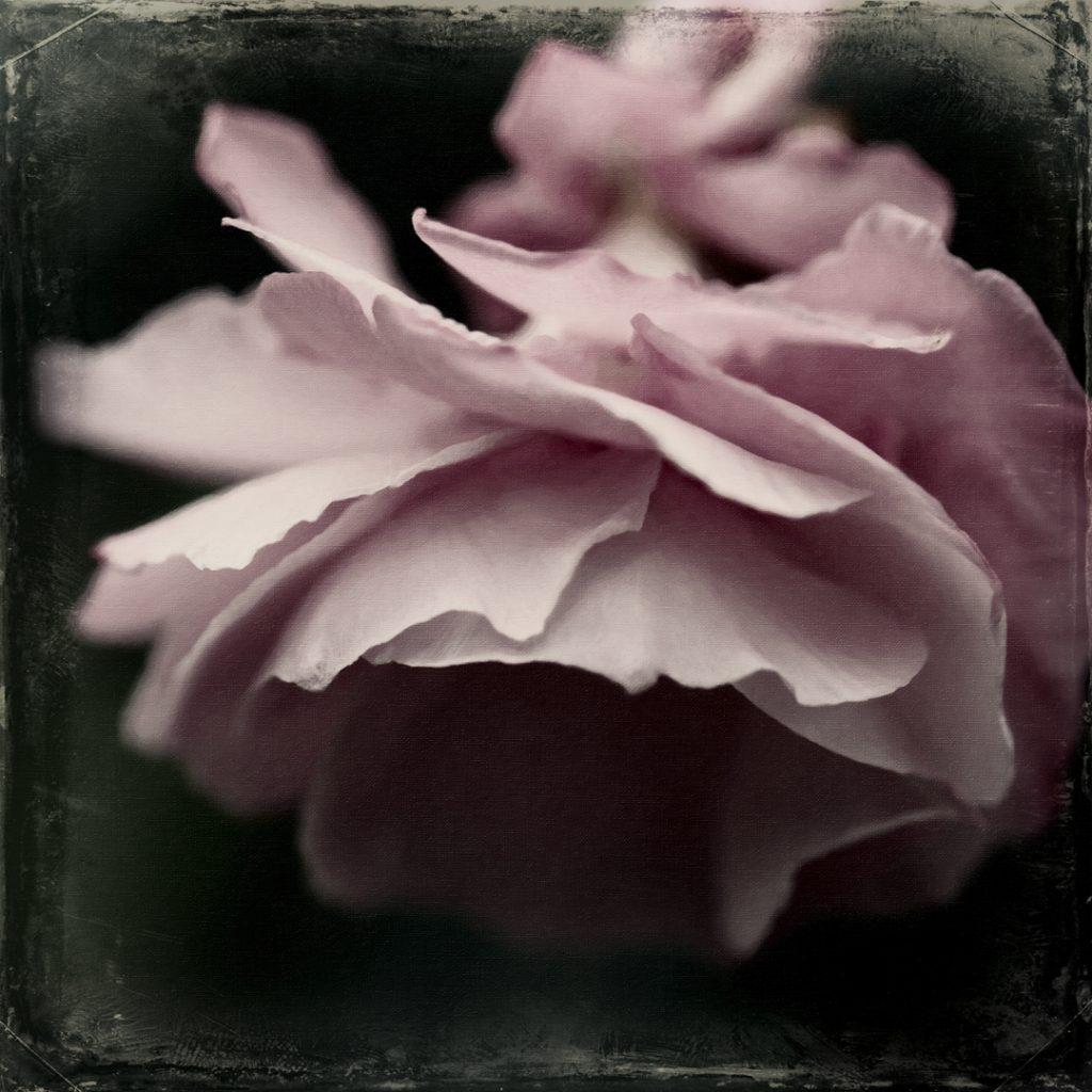 Flores Ephemeri 17129