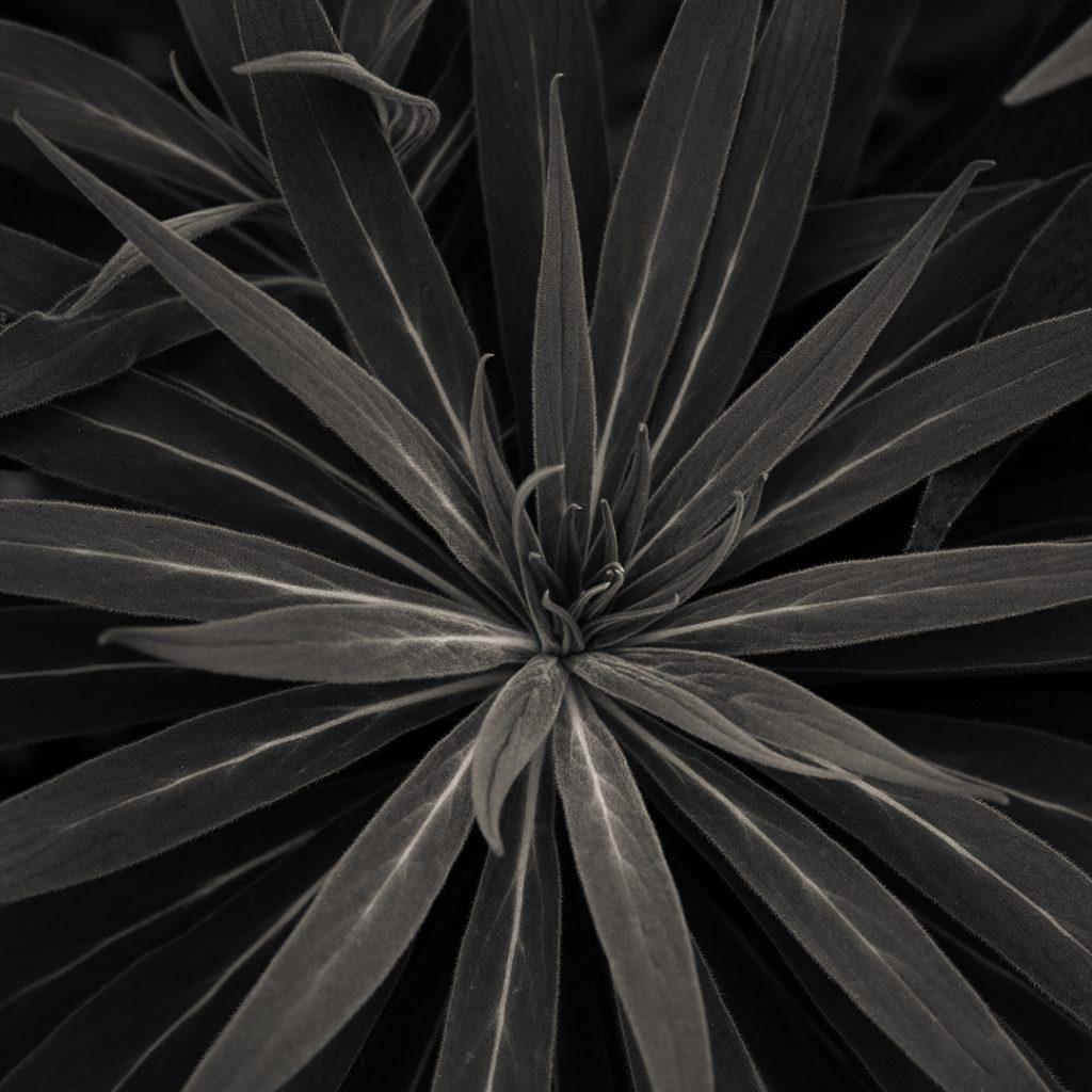Flores Ephemeri 17130