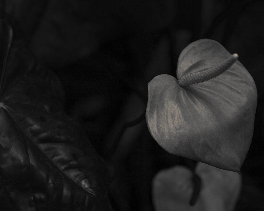 Flores Ephemeri 17133