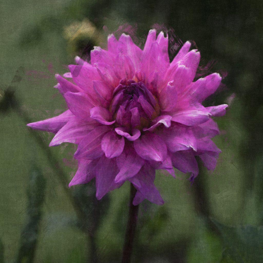 Flores Ephemeri 17134