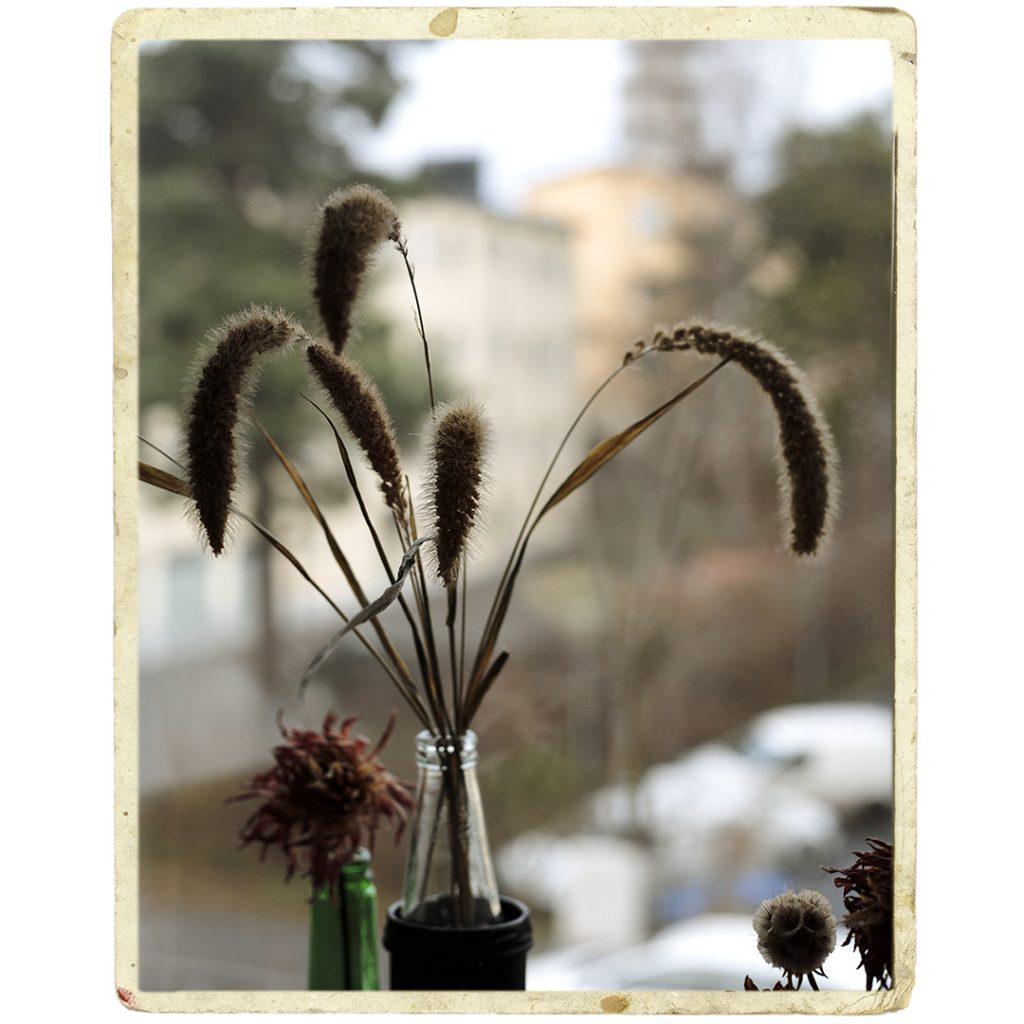 Flores Ephemeri 17126