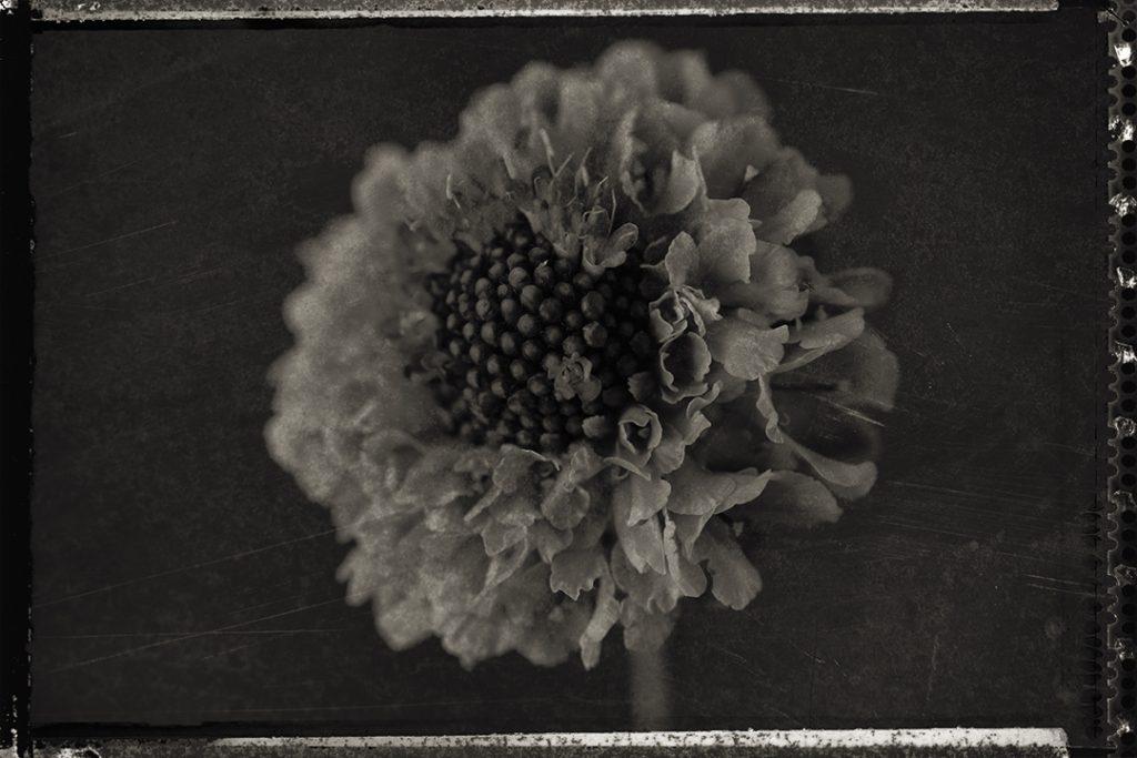 Flores Ephemeri 18002