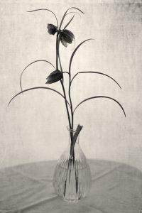 Winter Fritillaria