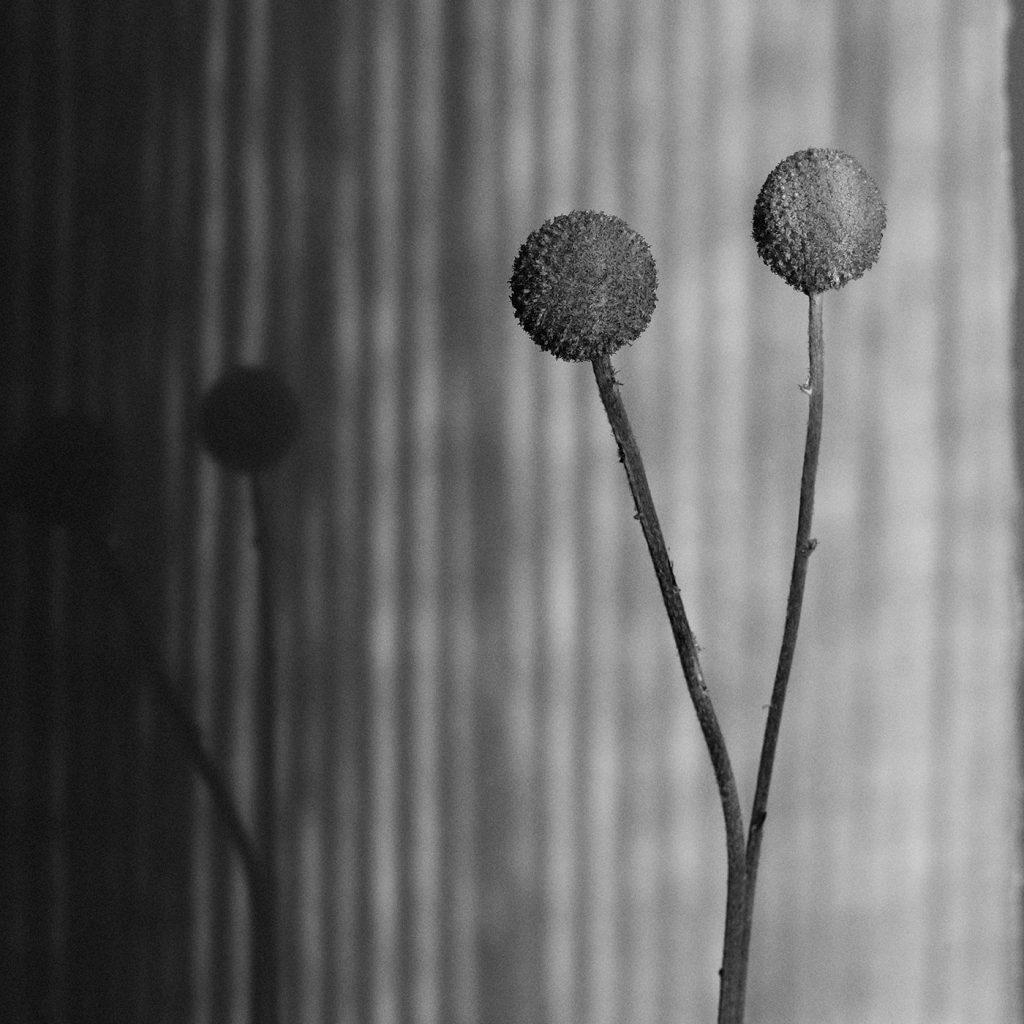 Flores Ephemeri 18013