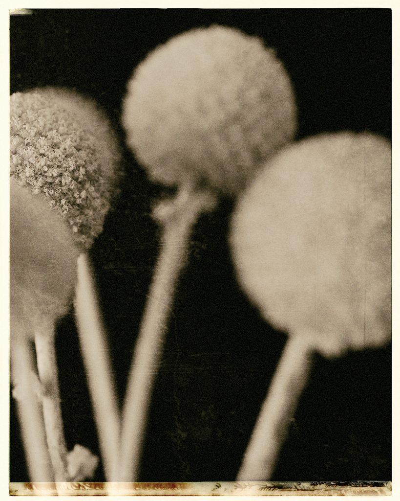 Flores Ephemeri 18014