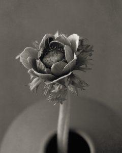 Flores Ephemeri 18010