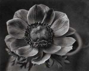 Flores Ephemeri 18012