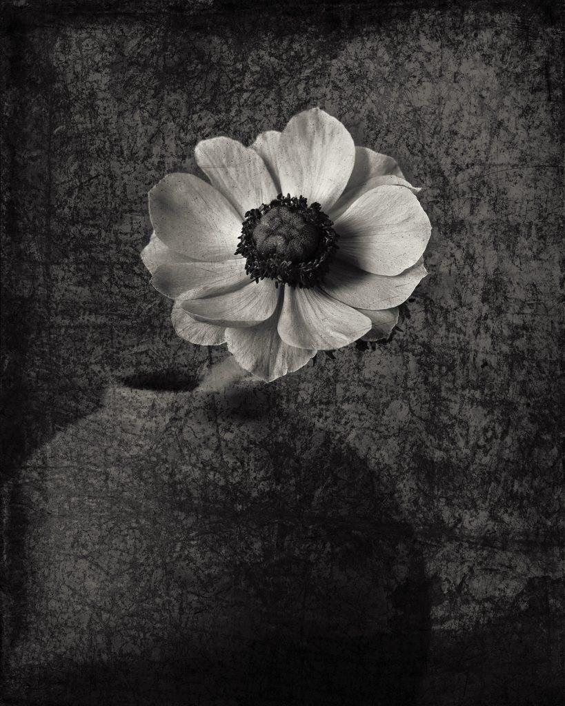 Flores Ephemeri 18015
