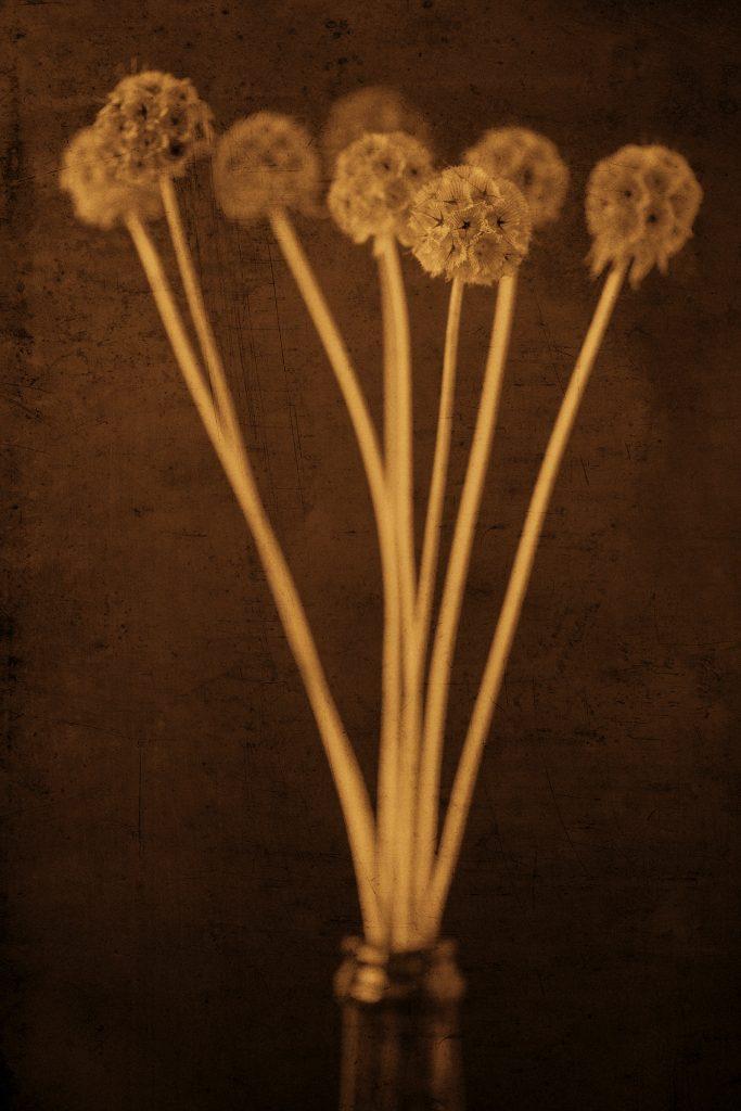 Flores Ephemeri 18016