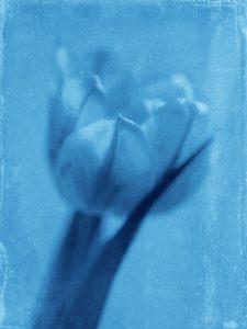 Flores Ephemeri 18023