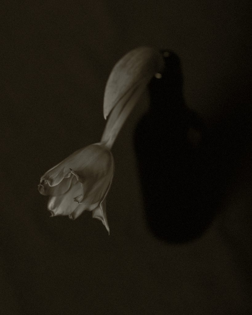 Flores Ephemeri 18018