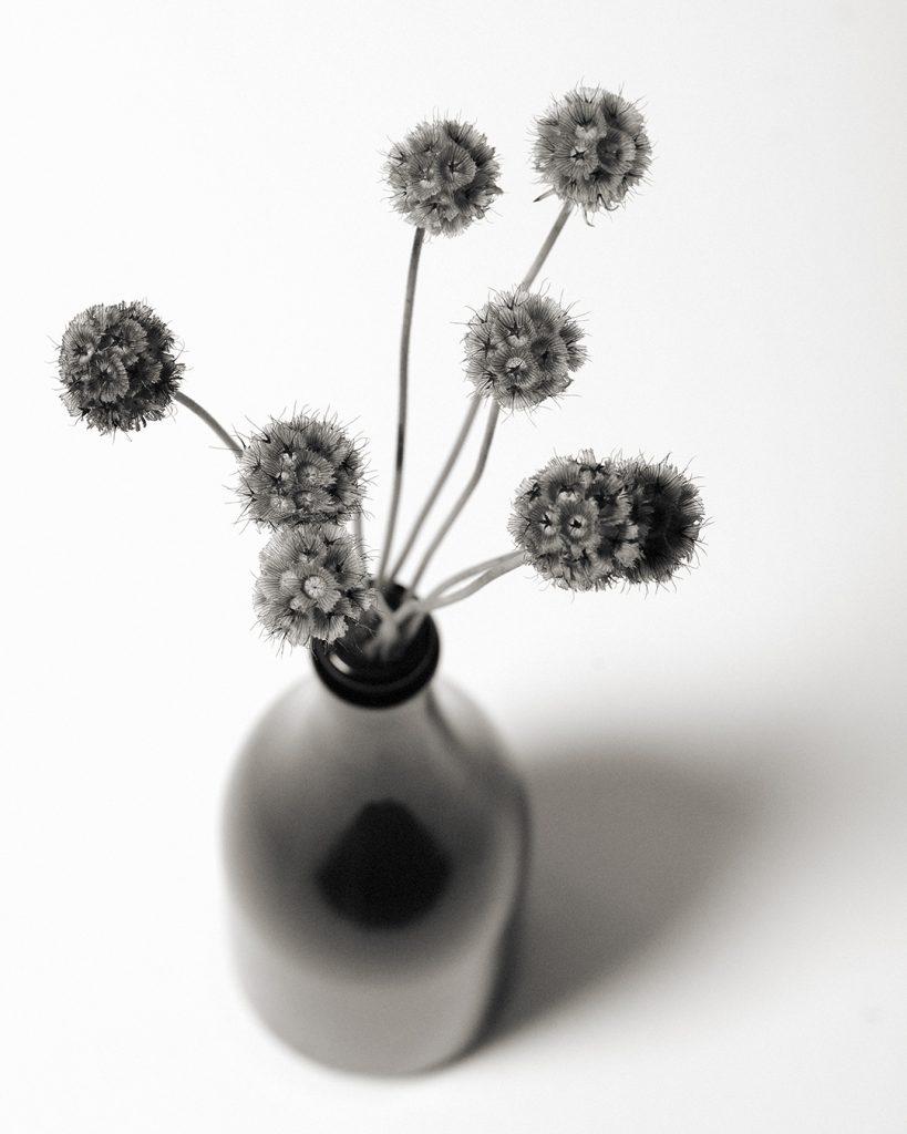 Flores Ephemeri 18019