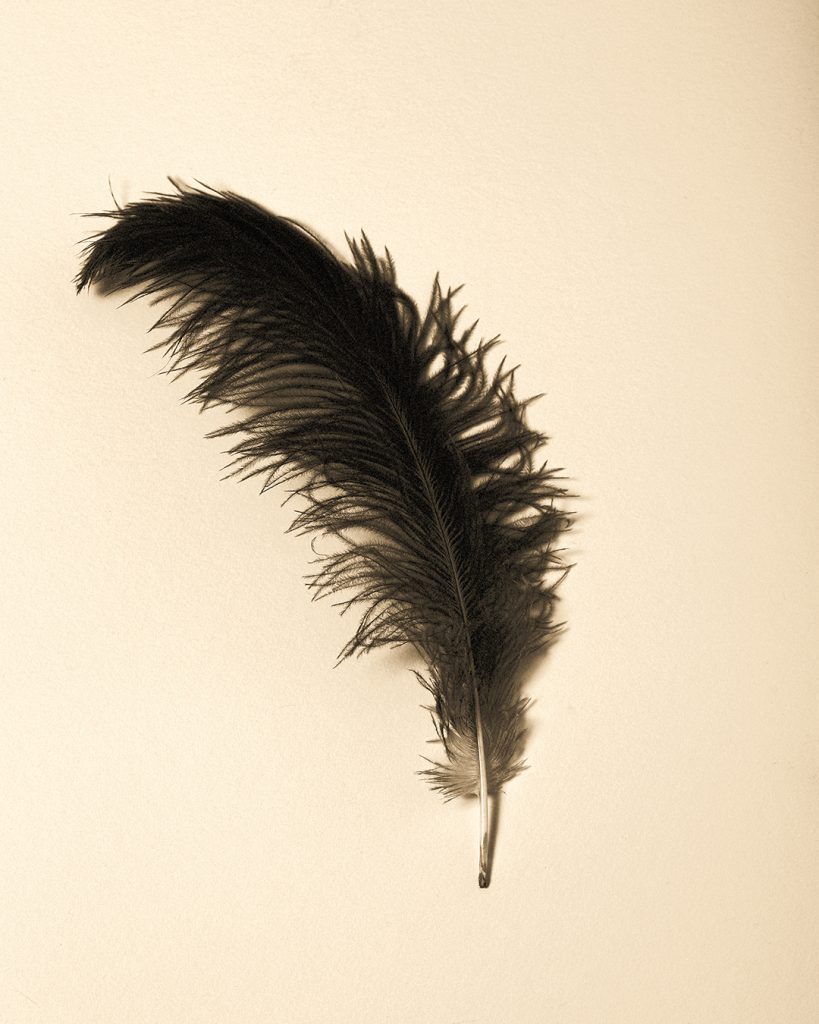 Easter Feather
