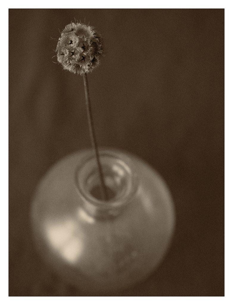 Flores Ephemeri 18021