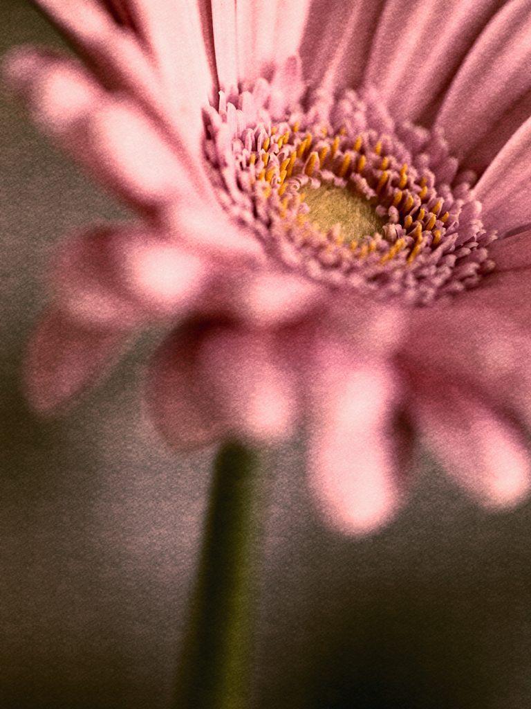 Flores Ephemeri 18024