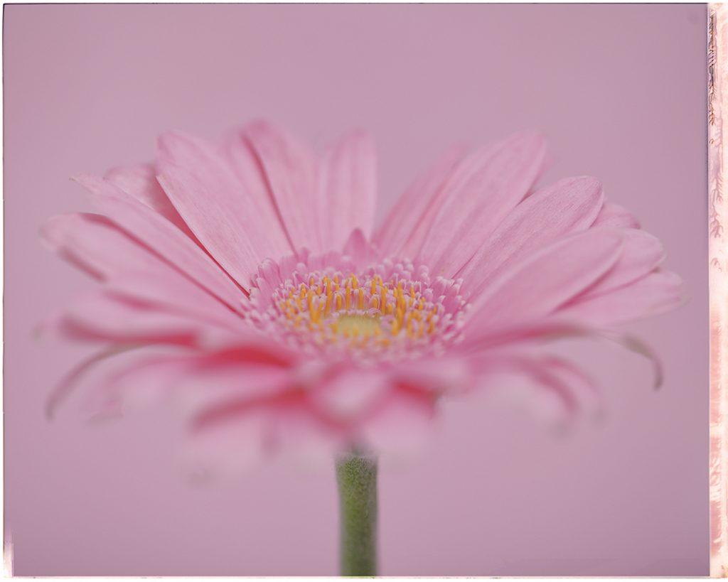 Flores Ephemeri 18027