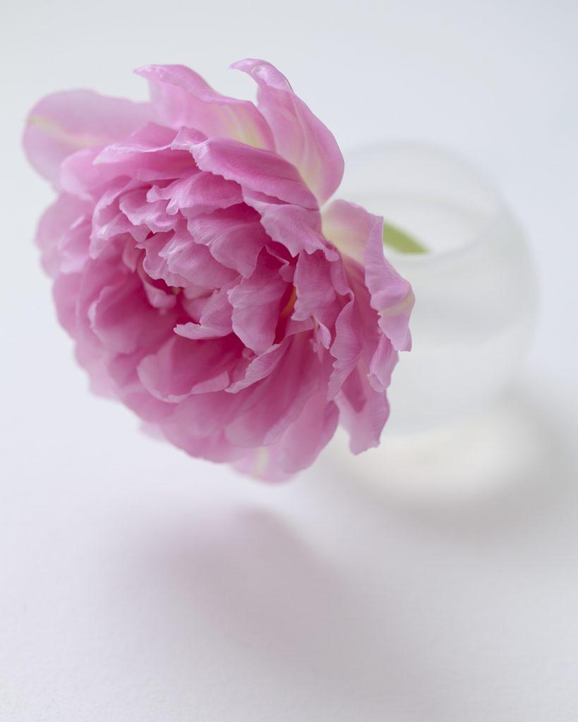 Flores Ephemeri 18028