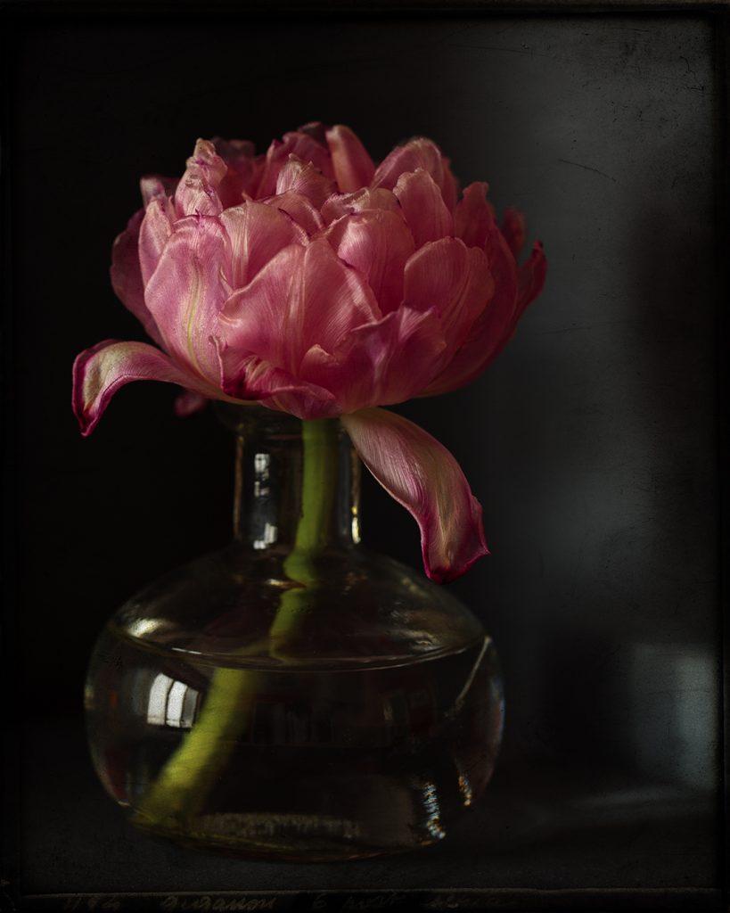 Flores Ephemeri 18031