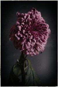 Flores Ephemeri 18034