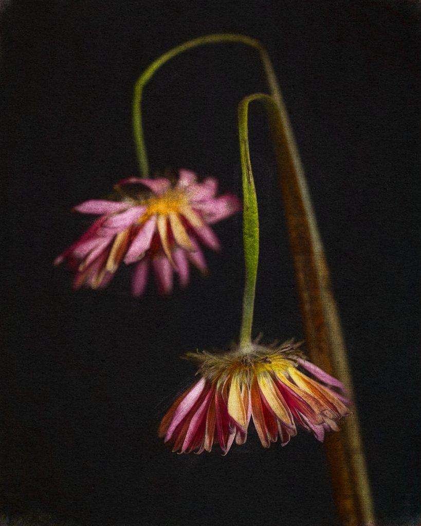 Flores Ephemeri 18035
