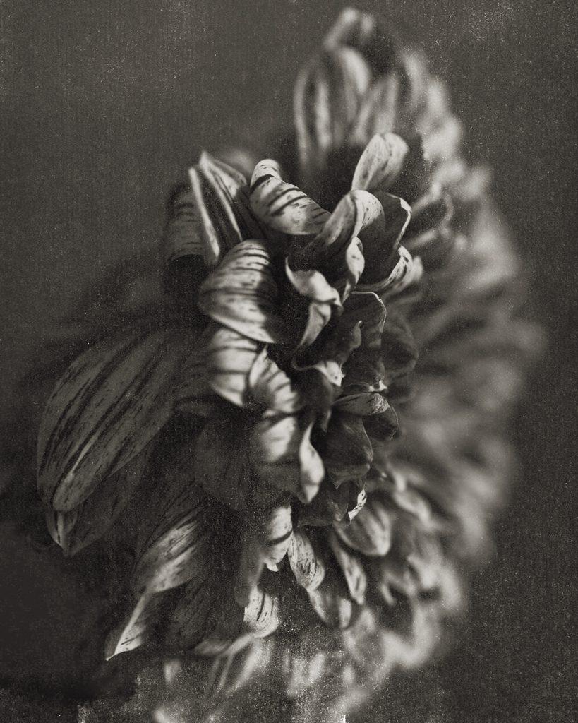 Flores Ephemeri 18044