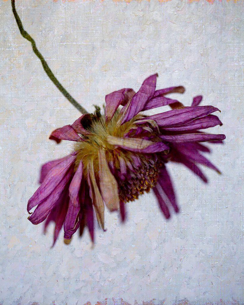 Flores Ephemeri 18045
