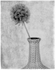 Flores Ephemeri 18046