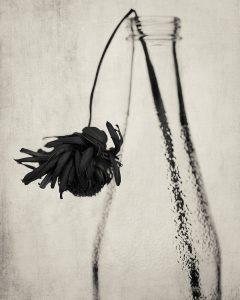 Flores Ephemeri 18047