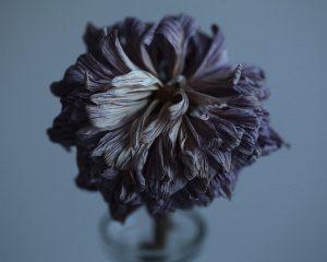 Flores Ephemeri 18057