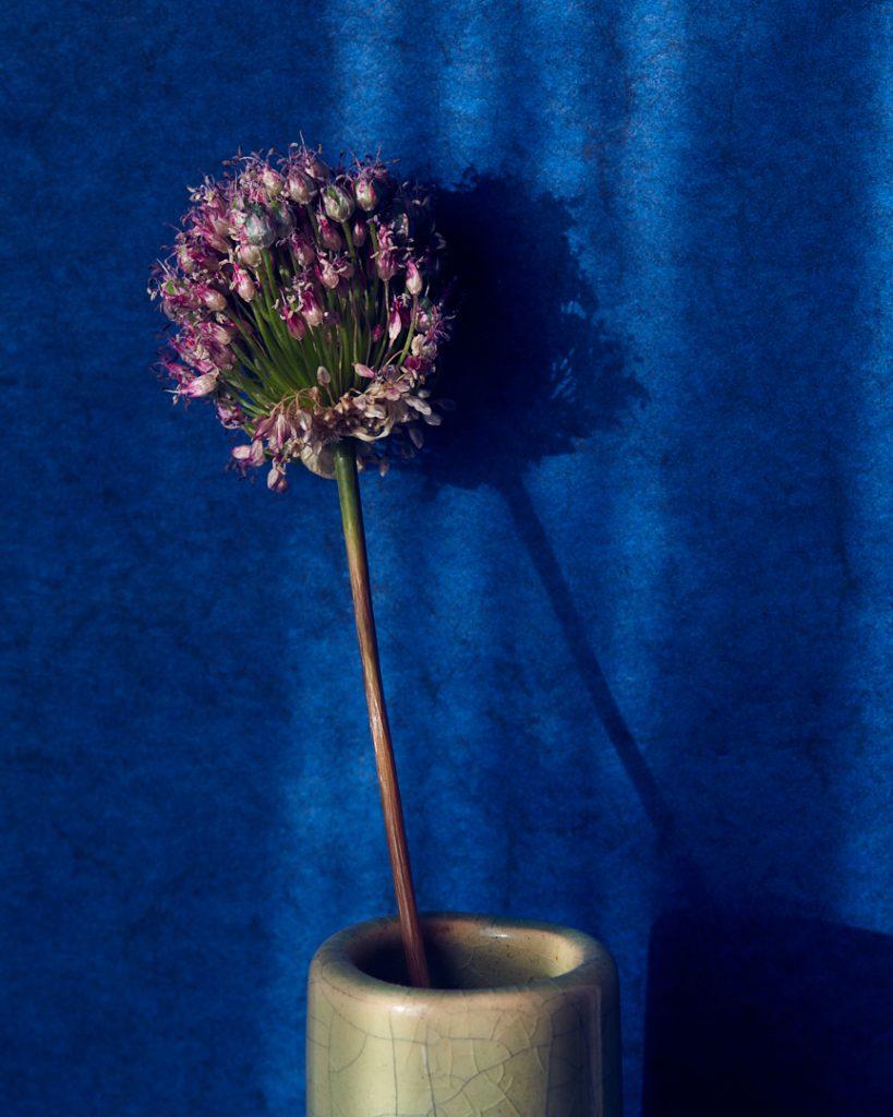 Flores Ephemeri 18059