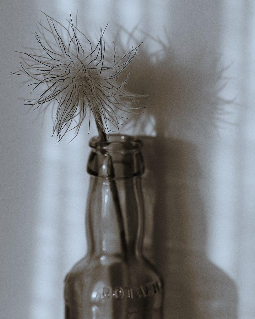 Flores Ephemeri 18058