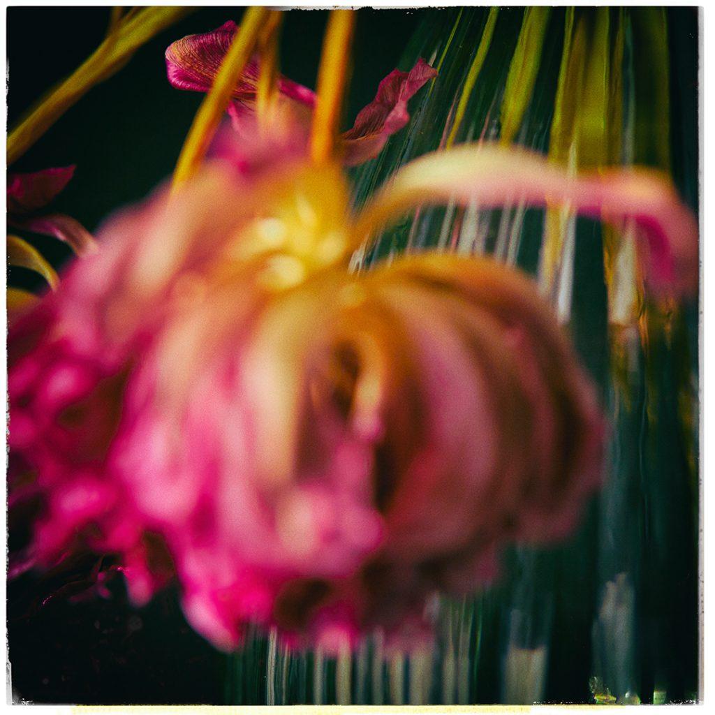 Flores Ephemeri 18061