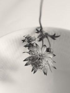Flores Ephemeri 18065