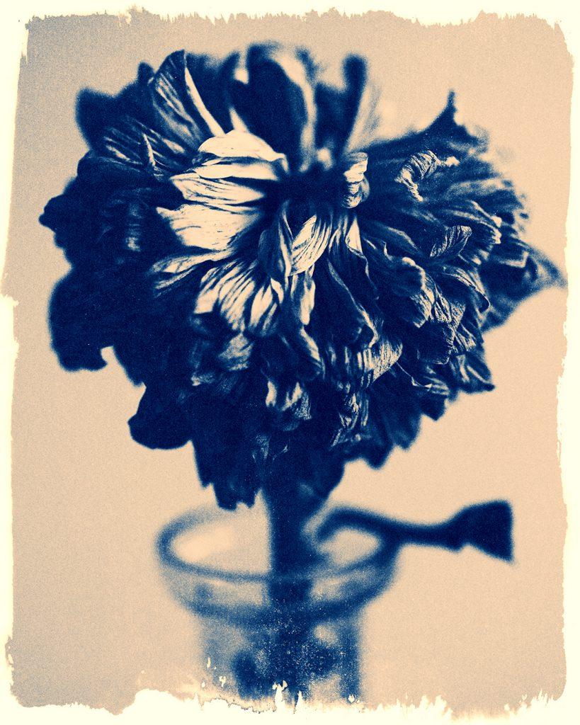 Dead Flowers 105
