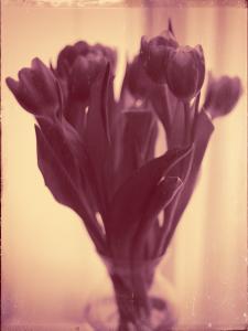 Flores Ephemeri 18001