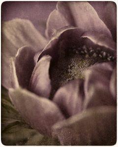 Flores Ephemeri 18022